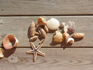 shells-on-deck-300x225